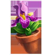 Bearded Iris Flower Pot