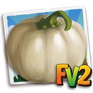 White Pumpkin Crop