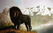 Black lion by paulie svk-d7m6ocr