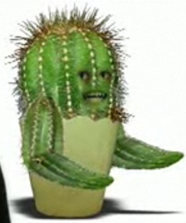 Monster cactus