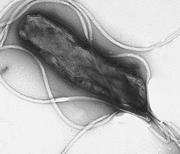 Germ-