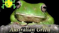 File:Frogger thumbnail.jpg