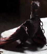 Dragon Young Drogon