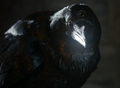Three-eyed raven.png