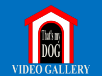 That's My Dog Video Gallery