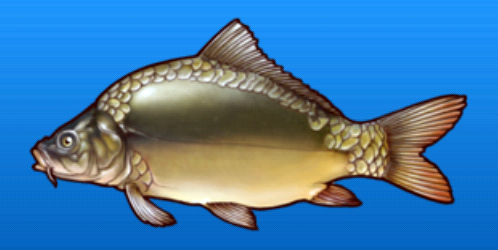File:Leather carp.png