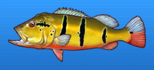 File:Peacock bass.png