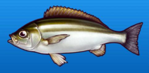 File:Pigfish.png