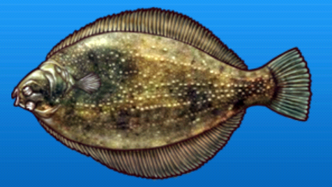 File:Roughscale sole.png