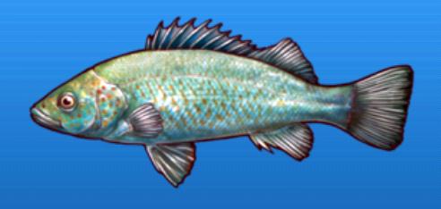 File:Spangle perch.png