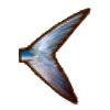 File:Blue tail.png