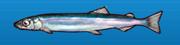 Candlefish