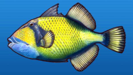 File:Titan triggerfish.png