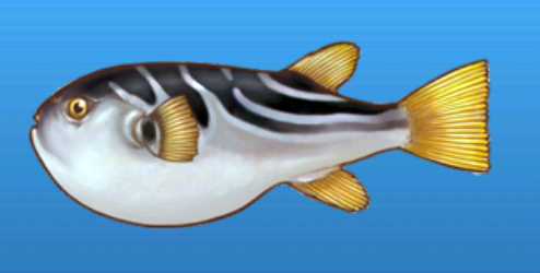File:Striped puffer.png