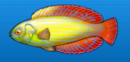 File:Red sea yellowtail.png