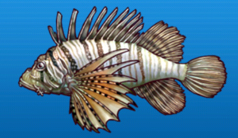 File:Lion fish.png