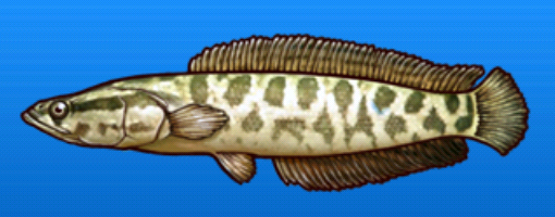 File:Snakehead.png