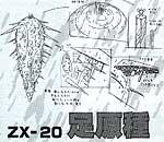 ZX 20