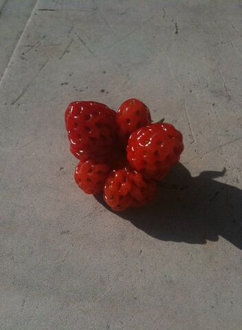 File:Strawberry Catfacing.jpg