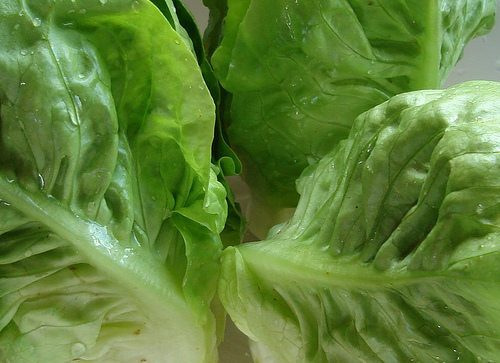 File:Lettuce Little Gem.jpg