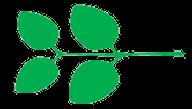 Leaf morphology Opposate