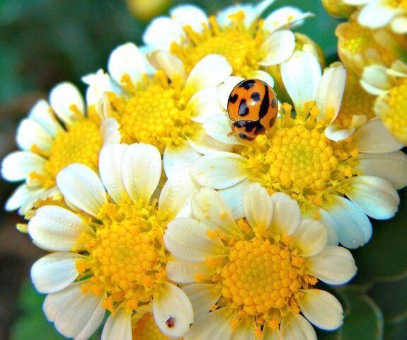 File:Welcomeflowers-7047.jpg