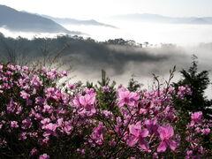 Rhododendron&Vast ocean of clouds、コバノミツバツツジ&篠山盆地雲海、盃ヶ岳4256293