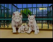 The White Lion Family