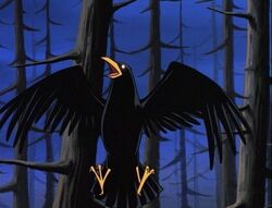 Bird Raven