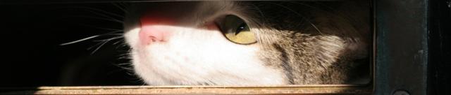 File:Io-cat.png