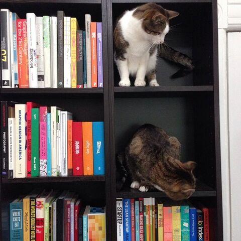 File:Cats-in-shelf.jpg