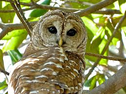 File:Owl6.png