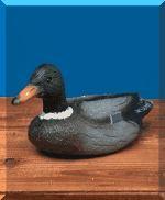 File:Duck.jpg