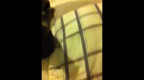 Thumbnail for version as of 01:02, November 14, 2013
