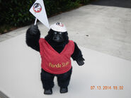 Florida state gorilla