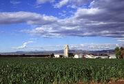 Corn production in Colorado