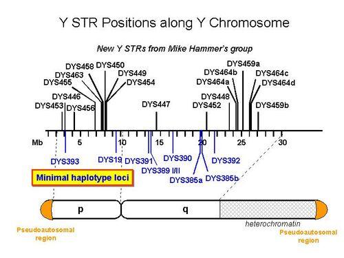 Y STR Positions