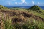Guam Grassland
