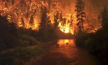 Forest-fire-threat