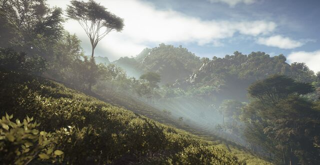 File:Sri Lankan Jungle.jpg