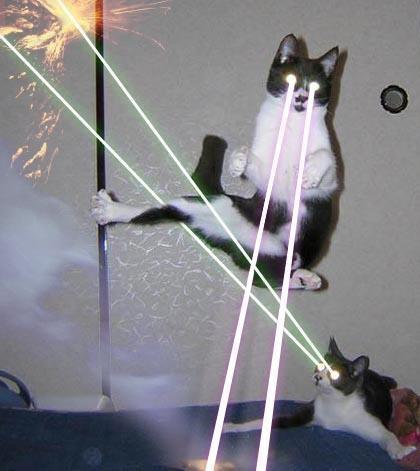 File:ThunderClan Cats.jpg