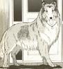 Lassie2