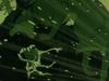 Vlcsnap-2012-06-25-15h20m22s243