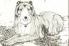 Lassie13