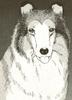 Lassie9
