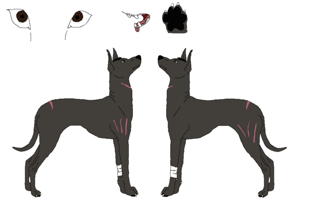 File:Xoloitzcuintli ref lines by nora and yagari-d58kme3.png