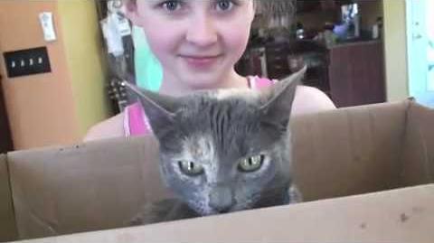 Pets with Sarah Sabrina