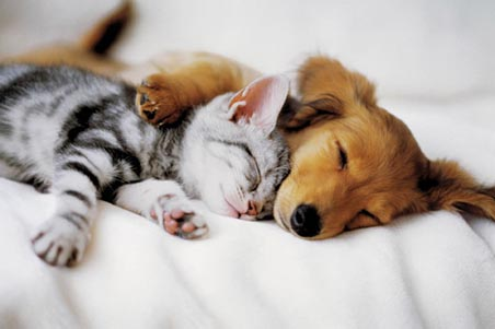 File:Lgwiz01556+cuddles-kitten-and-puppy-poster.jpg