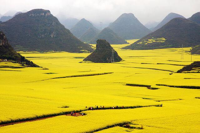 File:Flower Fields.jpg