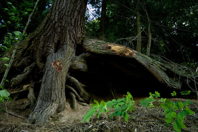 File:Under the tree roots by eyefeather stock-1-.jpg